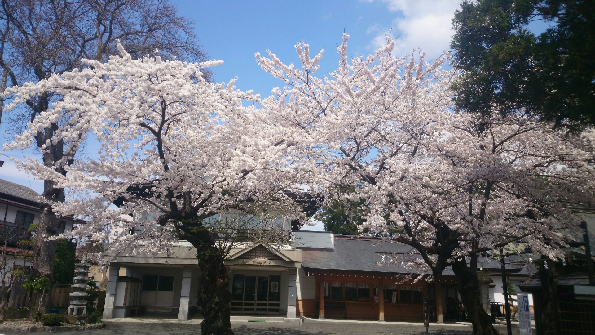 2014年4月22日の諏訪神社境内のさくら